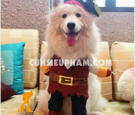 Junie House - Đồ siêu nhân, đồ cướp biển cho chó - Trang phục minions cho chó - vòng cổ dạ quang cho chó