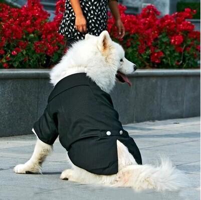 Áo chú rễ, áo cưới cho cún yêu - cunsieupham.com