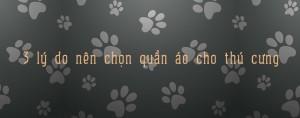 3 lý do nên chọn quần áo cho thú cưng - cunsieupham.com