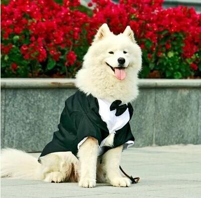 Junie House - Cách đo kích cỡ quần áo cho chó, quần áo siêu nhân cho chó, quần áo cosplay cho chó