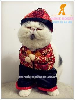 Quần áo siêu nhân Junie House - Đồ tết cho chó mèo - Trang phục hiệp sĩ cao bồi cho chó - Đồ Minions - Đồ cướp biển cho chó