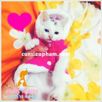 Quần áo tai thỏ cho chó mèo - trang phục siêu nhân Junie House - Trang phục hiệp sĩ cao bồi cho chó - Đồ Minions - Đò cướp biển cho chó