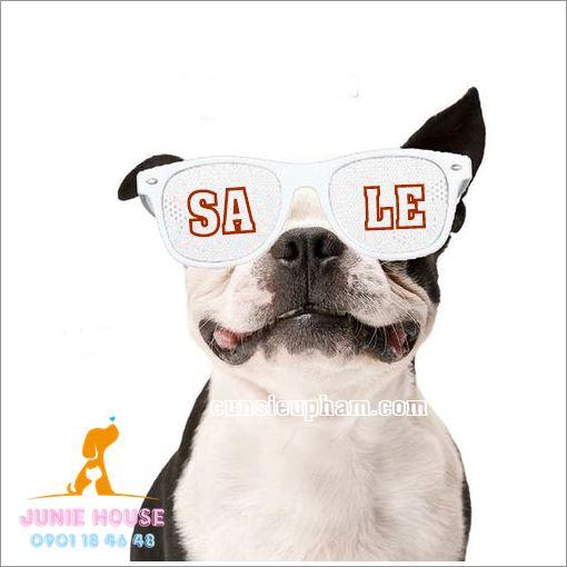 Cún cưng cũng cần được trang bị kính mát để bảo vệ mắt khỏi tia cực tím và cải thiện tầm nhìn xa - Junie House