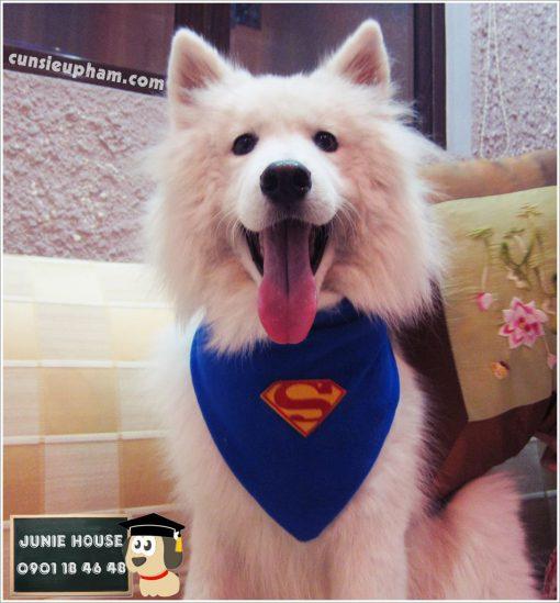 Khăn quàng cổ siêu anh hùng cho chó mèo - Balo ong vàng cho chó mèo - Áo superman cho chó lớn - Balo cho chó mèo - quần áo khủng long cho chó mèo - quần áo tết cho chó mèo - trang phục siêu nhân Junie House - Trang phục hiệp sĩ cao bồi cho chó - Đồ Minions - Đồ cướp biển cho chó