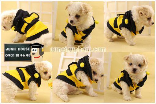 Quần áo ong vàng cho chó mèo - Áo superman cho chó lớn - Balo cho chó mèo - quần áo khủng long cho chó mèo - quần áo tết cho chó mèo - trang phục siêu nhân Junie House - Trang phục hiệp sĩ cao bồi cho chó - Đồ Minions - Đồ cướp biển cho chó