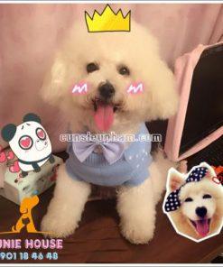 Nơ đeo cổ cho chó mèo - Balo cho chó mèo - quần áo khủng long cho chó mèo - quần áo tết cho chó mèo - trang phục siêu nhân Junie House - Trang phục hiệp sĩ cao bồi cho chó - Đồ Minions - Đồ cướp biển cho chó