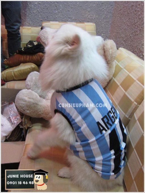 Áo cầu thủ cho chó lớn - kimono cho chó mèo - Balo ong vàng cho chó mèo - Áo superman cho chó lớn - Balo cho chó mèo - quần áo khủng long cho chó mèo - quần áo tết cho chó mèo - trang phục siêu nhân Junie House - Trang phục hiệp sĩ cao bồi cho chó - Đồ Minions - Đồ cướp biển cho chó - 0901 18 46 48