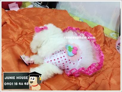 Váy công chúa cho chó mèo - kimono cho chó mèo - Balo ong vàng cho chó mèo - Áo superman cho chó lớn - Balo cho chó mèo - quần áo khủng long cho chó mèo - quần áo tết cho chó mèo - trang phục siêu nhân Junie House - Trang phục hiệp sĩ cao bồi cho chó - Đồ Minions - Đồ cướp biển cho chó - 0901 18 46 48