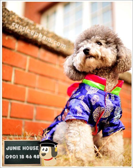 Váy Hàn Quốc cho chó mèo - kimono cho chó mèo - Balo ong vàng cho chó mèo - Áo superman cho chó lớn - Balo cho chó mèo - quần áo khủng long cho chó mèo - quần áo tết cho chó mèo - trang phục siêu nhân Junie House - Trang phục hiệp sĩ cao bồi cho chó - Đồ Minions - Đồ cướp biển cho chó - 0901 18 46 48