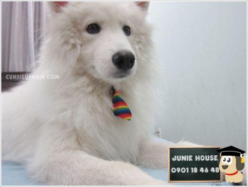 Cà vạt cho chó mèo - kimono cho chó mèo - Balo ong vàng cho chó mèo - Áo superman cho chó lớn - Balo cho chó mèo - quần áo khủng long cho chó mèo - quần áo tết cho chó mèo - trang phục siêu nhân Junie House - Trang phục hiệp sĩ cao bồi cho chó - Đồ Minions - Đồ cướp biển cho chó - 0901 18 46 48