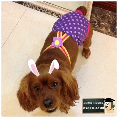 Junie House chuyên cung cấp trang phục cosplay cho chó mèo như áo Adidog có mũ, hiệp sĩ cao bồi, trang phục Superman, Cướp biển, quần chip có dây cho chó mèo... Hotline 0901 18 46 48