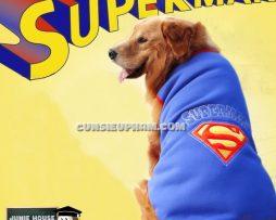 Junie House chuyên cung cấp trang phục cosplay cho chó mèo như áo Adidog có mũ, hiệp sĩ cao bồi, trang phục Superman, Cướp biển, áo superman cho chó lớn... Hotline 0901 18 46 48