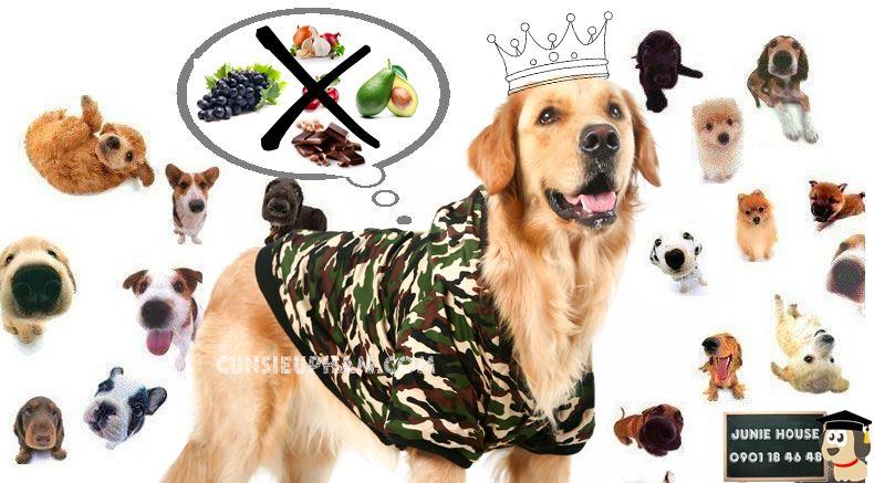 Những thức ăn chó không được ăn - những thức ăn không tốt cho chó - những thức ăn độc hại cho chí - Junie House Cún siêu phàm