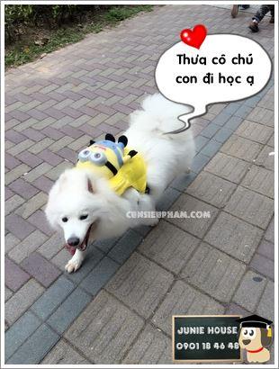 Junie House chuyên cung cấp trang phục cosplay cho chó mèo như áo Adidog có mũ, hiệp sĩ cao bồi, trang phục Superman, Cướp biển, ba lo minions cho chó lớn... Hotline 0901 18 46 48