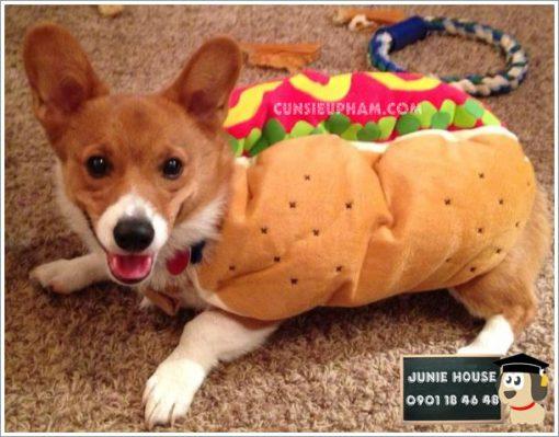 Junie House chuyên cung cấp trang phục cosplay cho chó mèo như áo Adidog có mũ, hiệp sĩ cao bồi, trang phục Superman, Cướp biển, Áo hotdog cho chó mèo... Hotline 0901 18 46 48