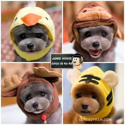 Junie House chuyên cung cấp trang phục cosplay cho chó mèo như áo Adidog có mũ, hiệp sĩ cao bồi, trang phục Superman, Cướp biển, mũ hình thú cho chó mèo... Hotline 0901 18 46 48