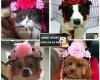 Junie House chuyên cung cấp trang phục cosplay cho chó mèo như áo Adidog có mũ, hiệp sĩ cao bồi, trang phục Superman, Cướp biển, mũ hoàn châu công chúa cho chó mèo... Hotline 0901 18 46 48