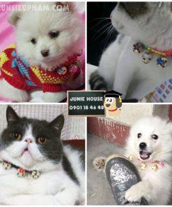 Junie House chuyên cung cấp trang phục cosplay cho chó mèo như áo Adidog có mũ, hiệp sĩ cao bồi, trang phục Superman, Cướp biển, vòng cổ chuông cho chó mèo... Hotline 0901 18 46 48