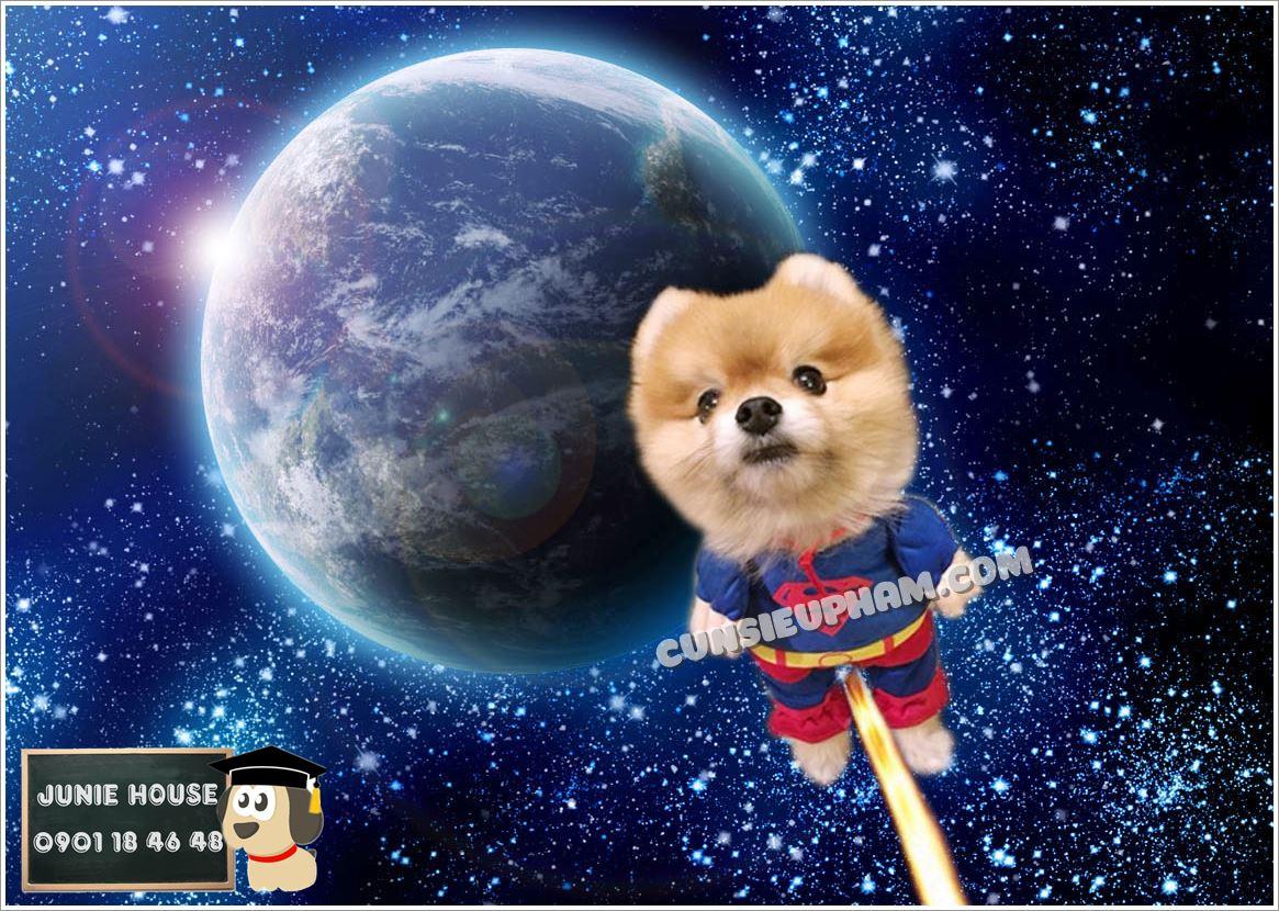 Nhóm chó vóc nhỏ bao gồm các bạn cún dưới 10 kg: Pomeranian, Pug, Poodle..