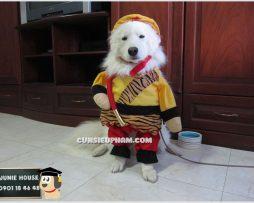 Junie House chuyên cung cấp trang phục cosplay cho chó mèo như áo Adidacog có mũ, hiệp sĩ cao bồi, trang phục Superman, Cướp biển, trang phục Tôn Ngộ Không cho chó mèo... Hotline 0901 18 46 48
