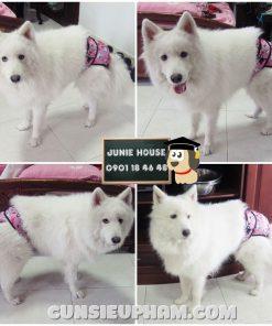 Junie House chuyên cung cấp trang phục cosplay cho chó mèo như áo Adidacog có mũ, hiệp sĩ cao bồi, trang phục Superman, Cướp biển, quần chip cho chó lớn... Hotline 0901 18 46 48