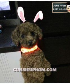 Junie House chuyên cung cấp trang phục cosplay cho chó mèo như áo Adidacog có mũ, hiệp sĩ cao bồi, trang phục Superman, Cướp biển, vòng cổ phát sáng cho chó mèo... Hotline 0901 18 46 48