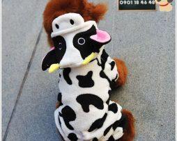 Junie House chuyên cung cấp trang phục cosplay cho chó mèo như áo Adidacog có mũ, hiệp sĩ cao bồi, trang phục Superman, Cướp biển, áo bò sữa cho chó mèo... Hotline 0901 18 46 48