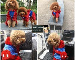 Junie House chuyên cung cấp trang phục cosplay cho chó mèo như áo Adidacog có mũ, hiệp sĩ cao bồi, trang phục Superman, Cướp biển, áo spiderman cho chó mèo... Hotline 0901 18 46 48