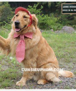 Junie House chuyên cung cấp quần áo cho chó, quần áo chó mèo, đồ Noel cho chó mèo, phụ kiện cho chó mèo, cà vạt cho chó lớn. Hotline 0901 18 46 48