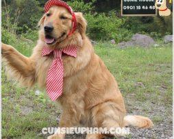 Junie House chuyên cung cấp quần áo cho chó, quần áo chó mèo, đồ chơi cho chó mèo, phụ kiện cho chó mèo, cà vạt cho chó lớn... Hotline 0901 18 46 48