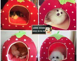 Junie House chuyên cung cấp quần áo cho chó, quần áo chó mèo, đồ chơi cho chó mèo, phụ kiện cho chó mèo, chuồng nệm trái dâu cho chó mèo... Hotline 0901 18 46 48