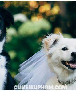 Junie House chuyên cung cấp quần áo cho chó, quần áo chó mèo, đồ chơi cho chó mèo, phụ kiện cho chó mèo, khăn voan cô dâu cho chó mèo... Hotline 0901 18 46 48