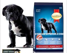 Junie House chuyên cung cấp quần áo cho chó, quần áo chó mèo, đồ chơi cho chó mèo, phụ kiện cho chó mèo, thức ăn cho chó nhỏ power pack... Hotline 0901 18 46 48