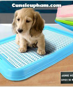 Junie House chuyên cung cấp quần áo cho chó, quần áo chó mèo, đồ chơi cho chó mèo, phụ kiện cho chó mèo, khay tập đi vệ sinh cho chó con... Hotline 0901 18 46 48