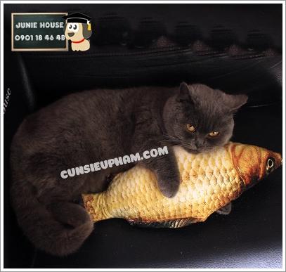 Junie House chuyên cung cấp quần áo cho chó, quần áo chó mèo, đồ chơi cho chó mèo, đồ chơi cá chép cho chó mèo... Hotline 0901 18 46 48