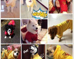 Junie House chuyên cung cấp quần áo cho chó, quần áo chó mèo, đồ chơi cho chó mèo, phụ kiện cho chó mèo, áo mưa superman cho chó lớn ... Hotline 0901 18 46 48