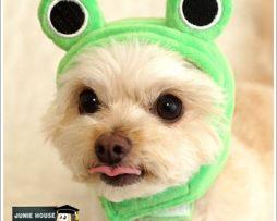 Junie House chuyên cung cấp quần áo cho chó, quần áo chó mèo, đồ chơi cho chó mèo, nón hình thú cho chó mèo... Hotline 0901 18 46 48
