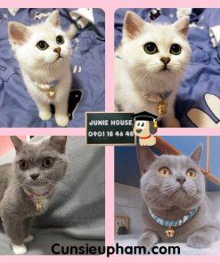 Junie House chuyên cung cấp các loại quần áo phụ kiện, đồ chơi cho chó mèo, vòng cổ mèo may mắn cho chó mèo nhỏ ... Hotline 0901184648