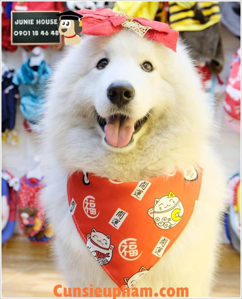 Junie House chuyên cung cấp quần áo cho chó, quần áo chó mèo, khăn yếm dành cho chó lớn... Hotline 0901 18 46 48