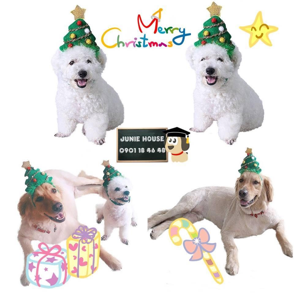 Junie House chuyên cung cấp quần áo cho chó, quần áo chó mèo, cài cây thông noel dành cho boss... Hotline 0901 18 46 48