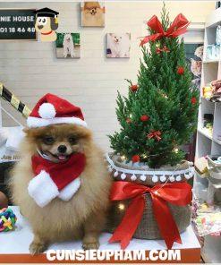 Junie House chuyên cung cấp quần áo cho chó, quần áo chó mèo, set mũ nón dành cho chó mèo nhỏ... Hotline 0901 18 46 48