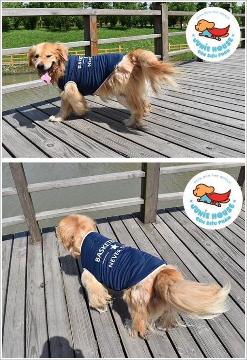 Junie House chuyên cung cấp quần áo, phụ kiện cho thú cưng: Trang phục superman, cướp biển, minions, áo basketball dành cho chó lớn   0901.18.46.48